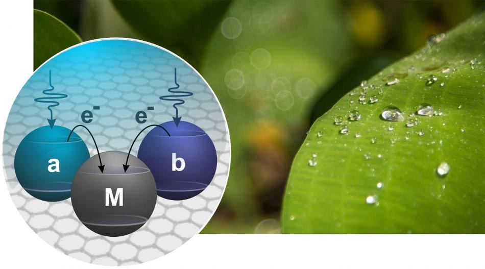 Combination of Quantum Physics and Photosynthesis Could Help Make Efficient Green Solar Cells